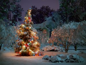 ws_outdoor_christmas_tree_1600x1200